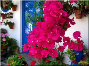 Decorar-Jardines-y-terrazas-con-mucho-color-5-580x432