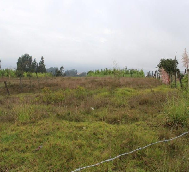 pumayunga, une