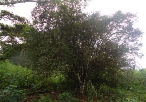 Terreno, En Venta, Código Inmueble 1058, Don Bosco, Macas, Morona Santiago,